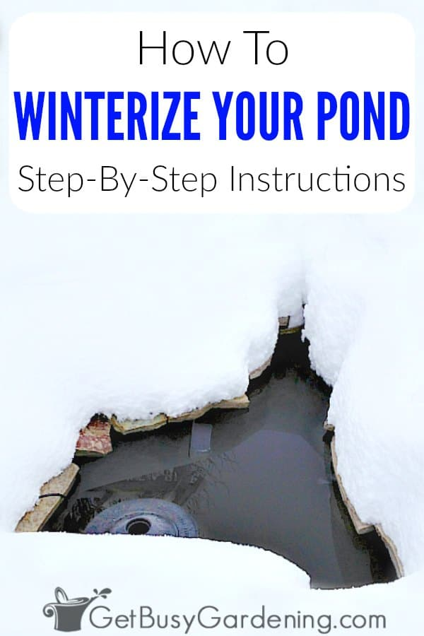 If you live in a cold climate, then it's important to properly winterize your backyard garden pond in the fall. Learn when to turn off your pond pump, and how to keep pond water from freezing over to ensure your fish and plants will stay alive through the winter. Get my winter pond care tips, and follow these easy step by step instructions for winterizing your pond.